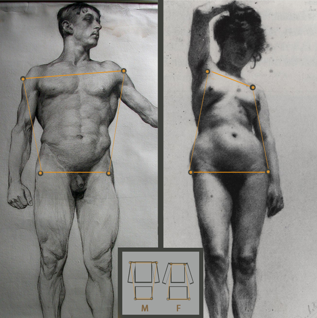 With hips male female Sex differences
